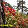 古峯神社境内03
