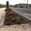 140504_3号公園花植え010